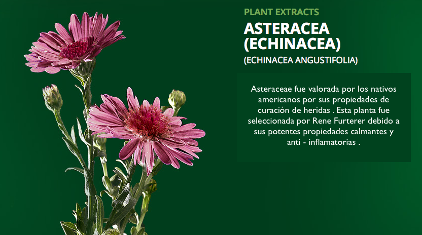 extracto de asteraceae